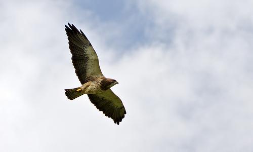 soaring1.jpg
