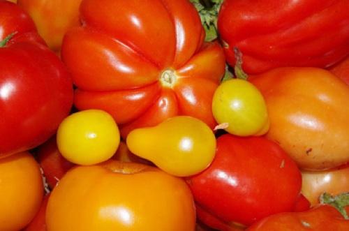 tomatoes500.jpg