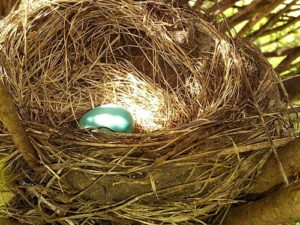 egg-414174_640_trust-the-process